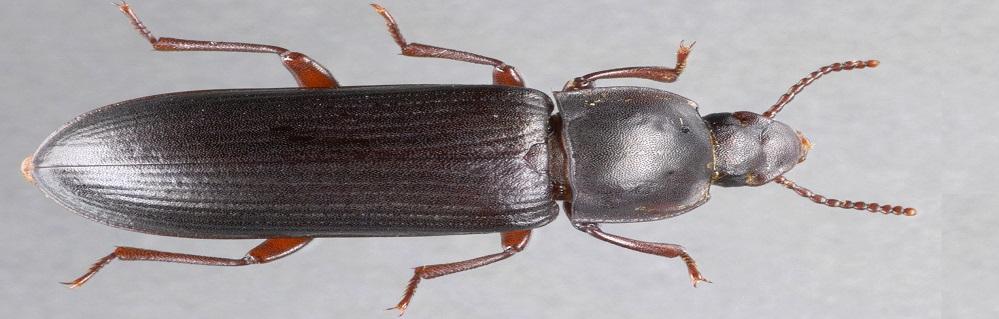 Дезинсекция от жука хрущака ПроКомфорт