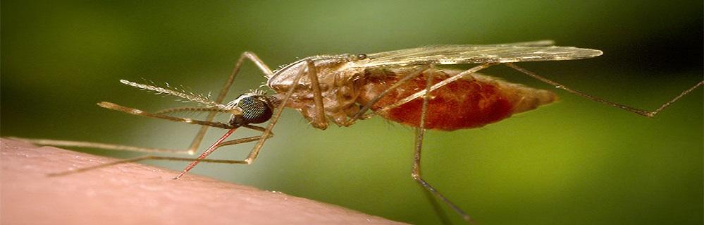 Дезинсекция от комаров ПроКомфорт