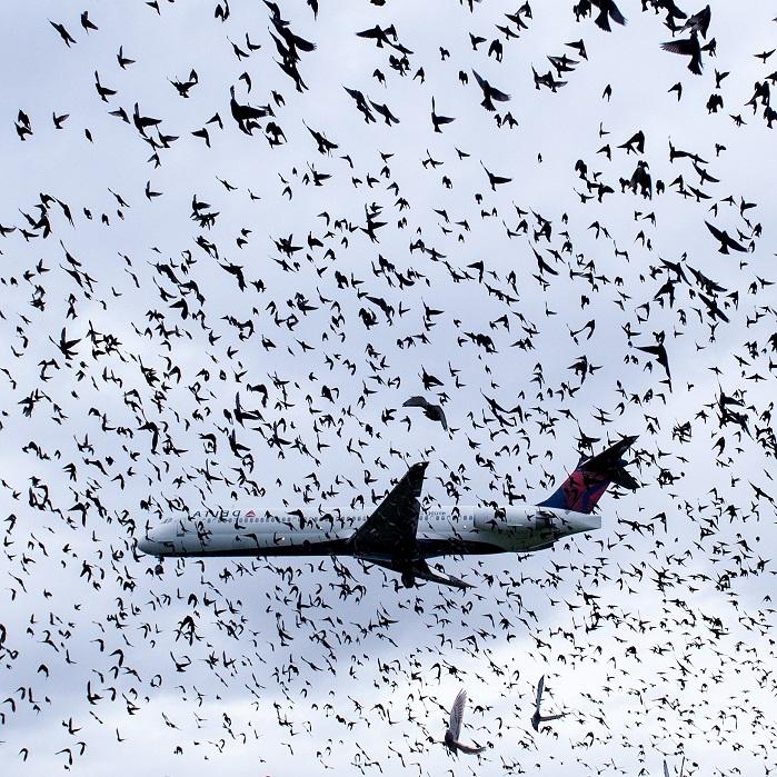 Борьба с птицами ПроКомфорт